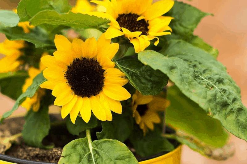plants absorb EMF